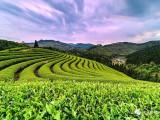 中国绿都 最氧金沙注册 | 坐饮香茶爱此山,沙县几个避暑好地方