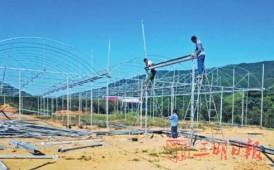三明清流县林畲乡:海峡兰花文化博览园项目加紧建设