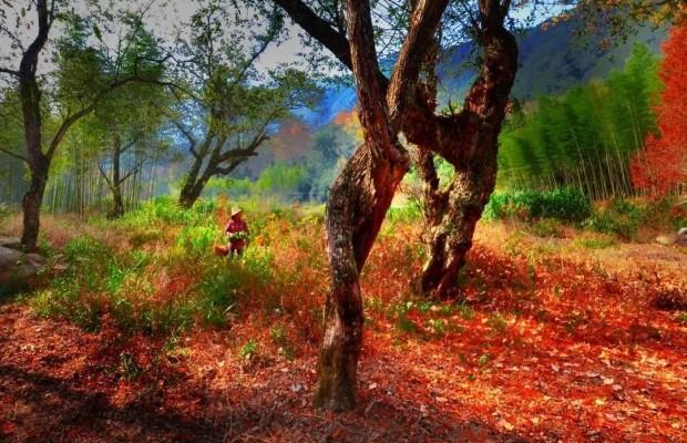 中國綠都 最氧三明   十佳森林康養基地④:森林氧吧龍棲山