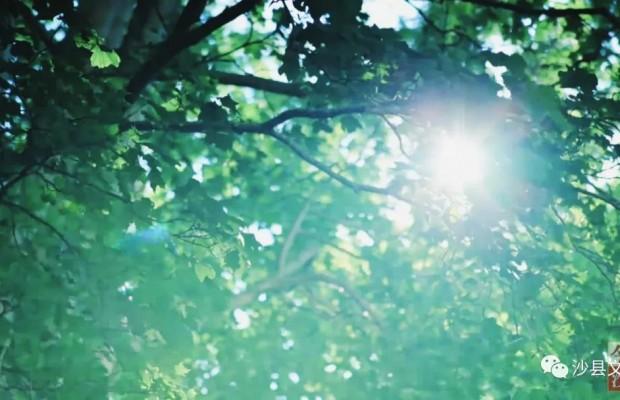 中国绿都 最氧三明 | 沙县的夏天,是什么颜色?