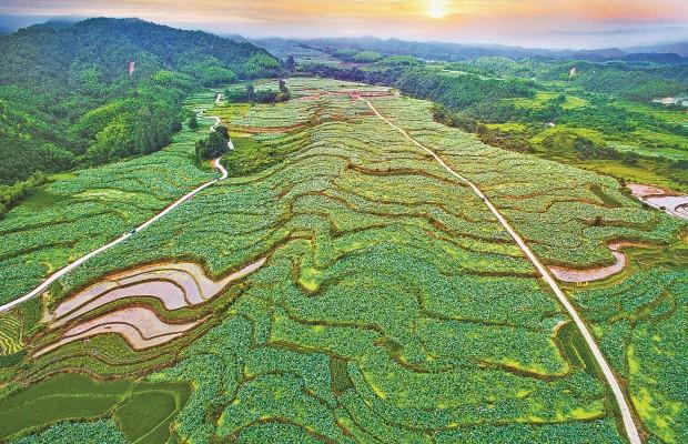 中國綠都 最氧三明 | 建寧:梯田蓮海  坪上荷風