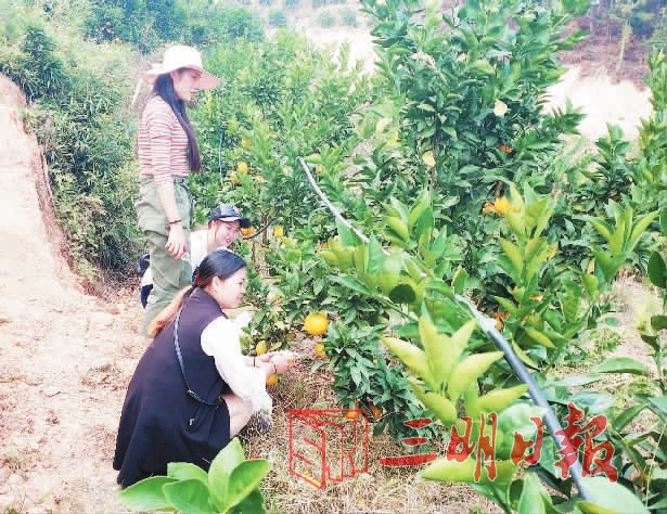全省最大果园落户到尤溪这个村,造就幸福联合